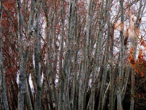 Invierno en Aranjuez. Jardín del Príncipe (fotografía CFB)