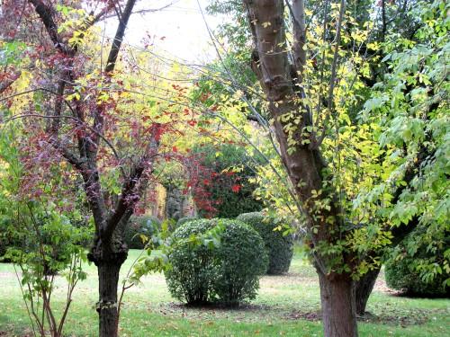 Esperanza de otoño en Aranjuez. Jardín del Príncipe (fotografía de CFB)